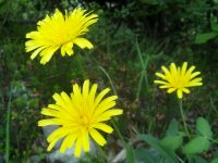 Blume und Licht_Foto Alina Kumaris