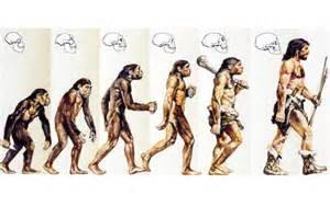 Der Mensch stammt vom Affen ab_morgenpost.de