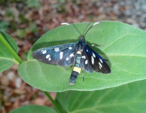 Schmetterling_Alina Kumaris