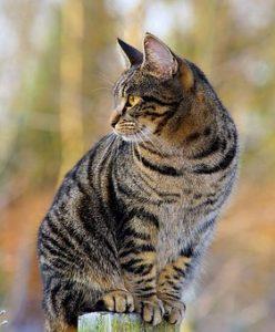 Katze-Bild von Kapa65 auf pixabay