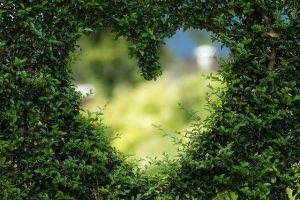 Herz-Bild von Bianca Mentil auf pixabay