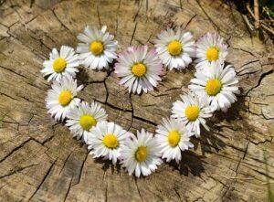 Herz-Bild von congerdesign auf pixabay
