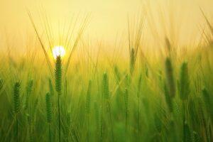 Sonnenaufgang-Bild von kangbch auf pixabay